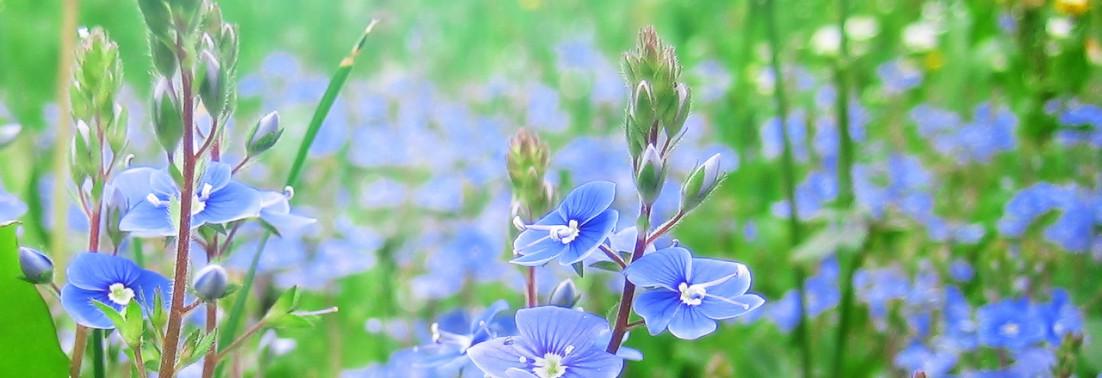 Spiritual Nature Nature-based Spirituality